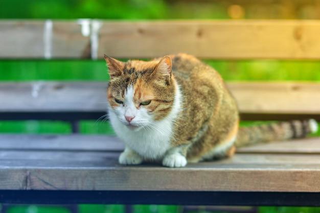 Een dakloze wit-rode kat zit op een bankje tegen een achtergrond van groen gras.