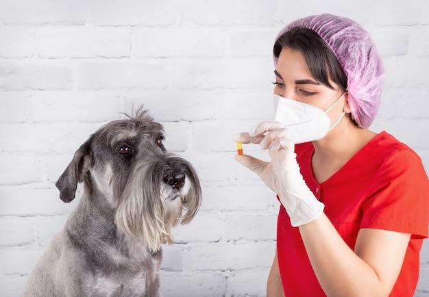 Een dierenarts geeft een zieke hond een pil