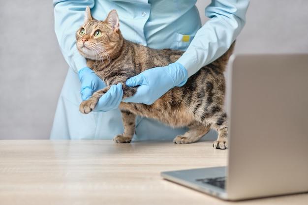 Een dierenarts in handschoenen maakt medische procedures voor een kat in een online training uitgezonden via een laptop.
