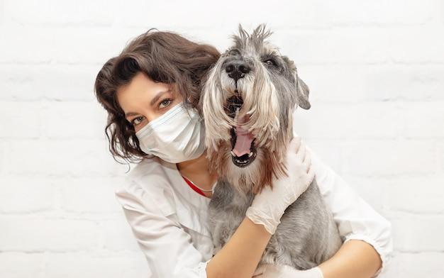 Een dierenarts met een beschermend masker met een schnauzerhond