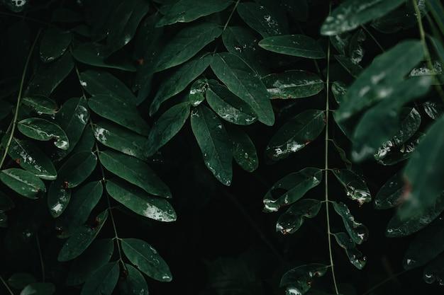 Een donkere achtergrond met donkergroene bladeren en schaduwen