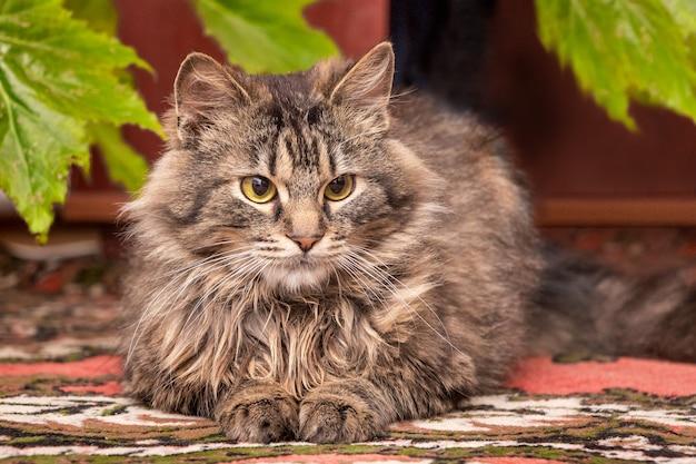 Een donzige, gestreepte kat zit op de grond bij de kamerplant