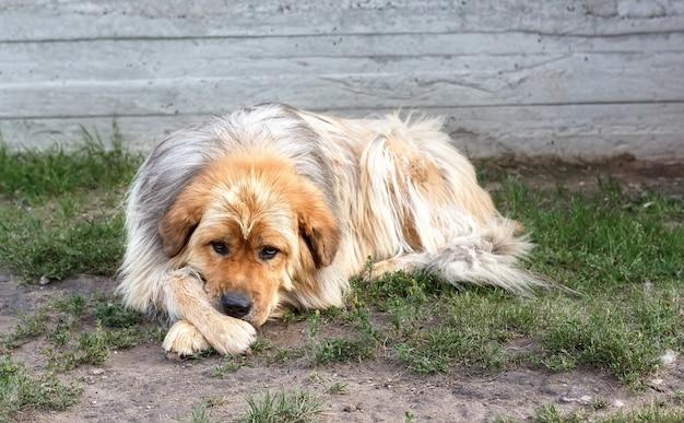 Een droevige, eenzame hond met bruine en witte vachtkleur.