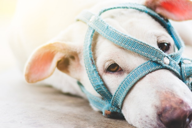 Een droevige hond met een snuit die op de grond naast deur van huis openlucht ligt