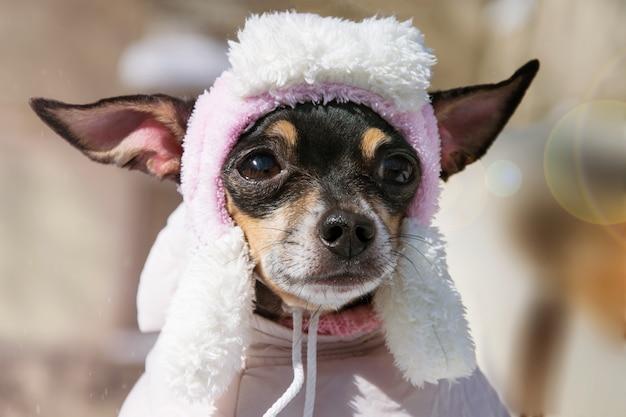 Een droevige kleine hond in een hoed. close-up