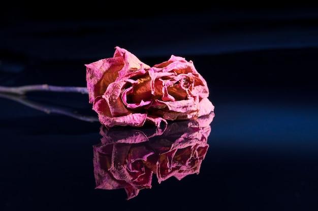 Een droge rode roos ligt op een zwarte gespiegelde achtergrond, daarin weerspiegeld.