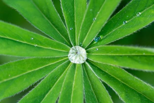 Een druppel dauw, verlicht door de zonnestralen, ligt op een blad.