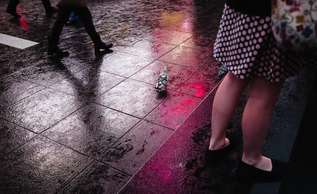 Een duif die op de natte straat loopt