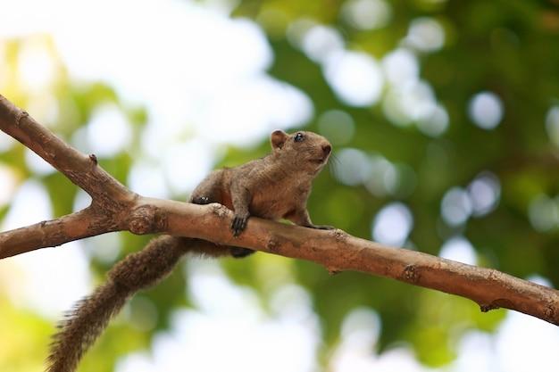 Een eekhoorn die een boom in de tuin beklimt