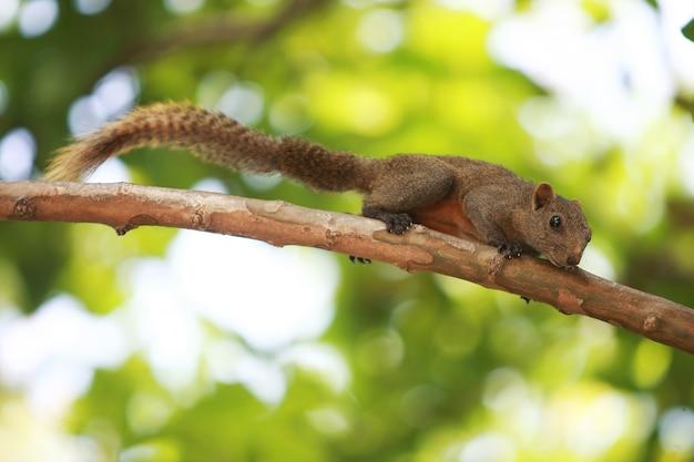 Een eekhoorn die in een boom in de tuin klimt