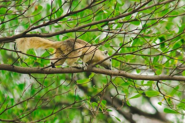 Een eekhoorn op een tak, eekhoorns zijn kleine zoogdieren met een vacht die het hele lichaam bedekt.