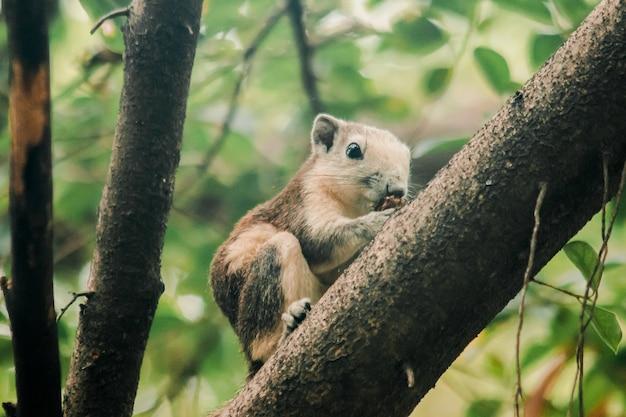 Een eekhoorn op een tak