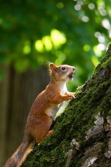 Een eekhoorn zit op een boom in het park