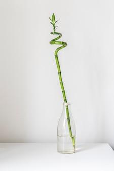 Een eenvoudige minimalistische stijl met een gesponnen bamboeplant op de plank thuis in de glazen fles met water