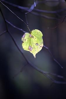 Een eenzaam herfstblad aan de boom