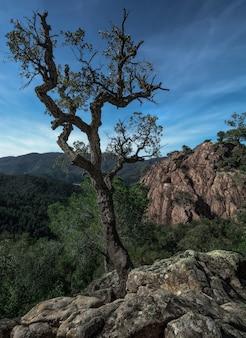 Een eenzame boom die boven een rots vóór een rotsachtige vorming & verre bergen, bewolkte hemel in spanje overleeft
