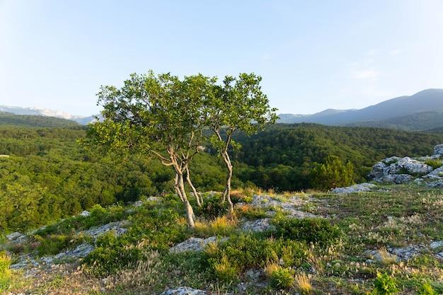 Een eenzame boom groeit op een rots in de wilde bergen..
