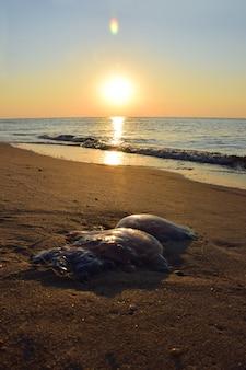 Een eenzame kwal ligt aan de zanderige kust. op de achtergrond de golven en de zon van de zonsondergang