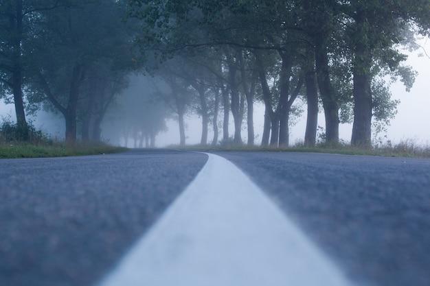 Een eenzame mistige weg die door een dik en stil bos snijdt.