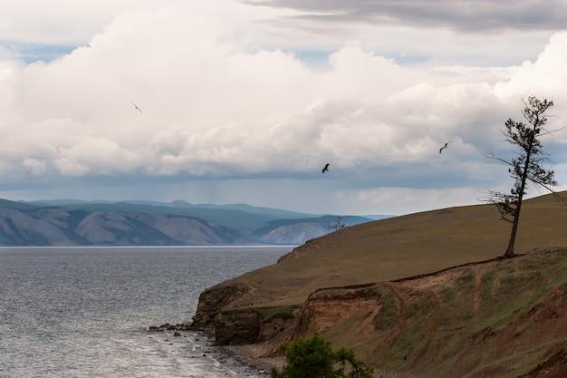 Een eenzame oude droge boom staat aan de zandige oever van het baikalmeer. verticaal kader. bergen achter het meer, in de luchtwolken. vogels vliegen meeuwen.