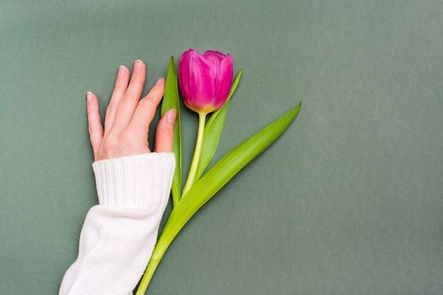 Een eenzame roze tulp met groene bladeren en een vrouwelijke hand op een stevige donkere achtergrond. kopieer ruimte