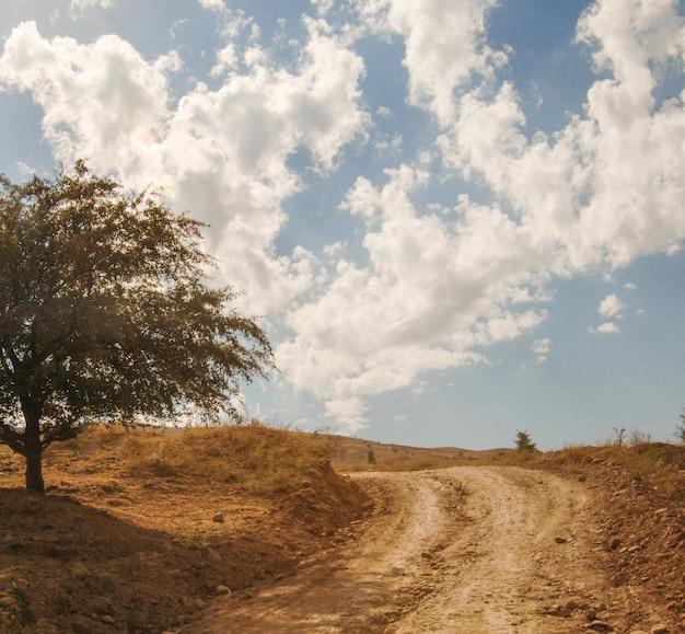 Een enkele boom in de buurt van de hemelachtergrond van de landelijke weg
