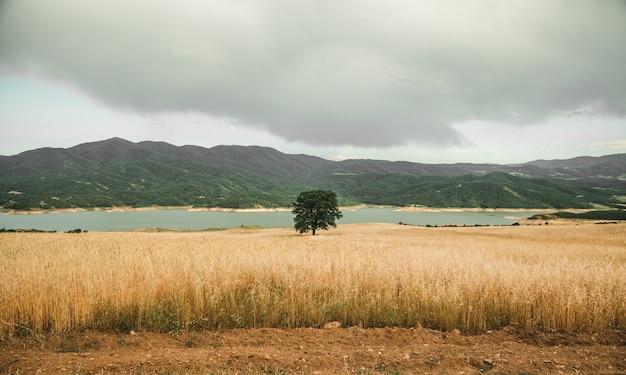 Een enkele groene boom in een veld vlakbij de zee