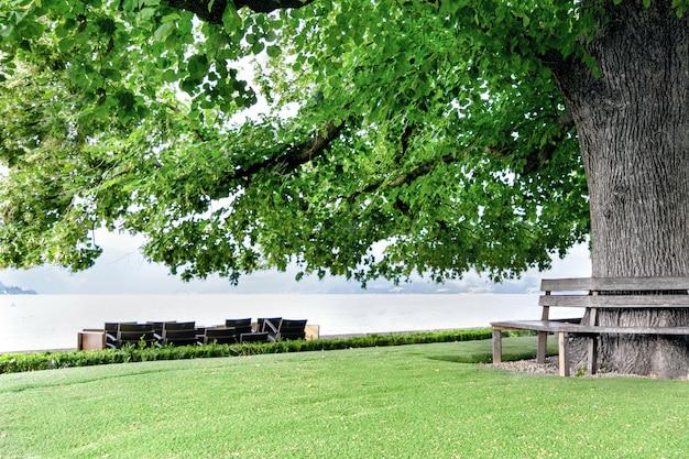 Een enorme boom ligt aan de oever van een meer op een achtergrond van bergen met een bank rond de stam.
