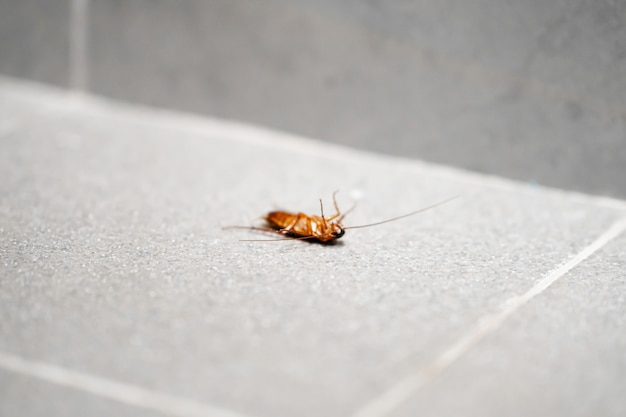 Een enorme kakkerlak op de grond. insectenplagen in huis.