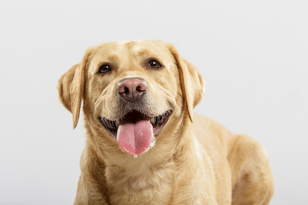 Een expressieve bastaardhond poseren in de studio tegen een witte achtergrond