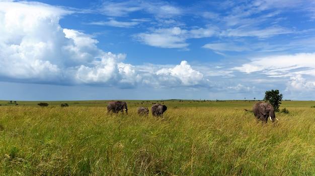 Een familie olifanten loopt in het gras op de lijkwade. familie van afrikaanse olifanten