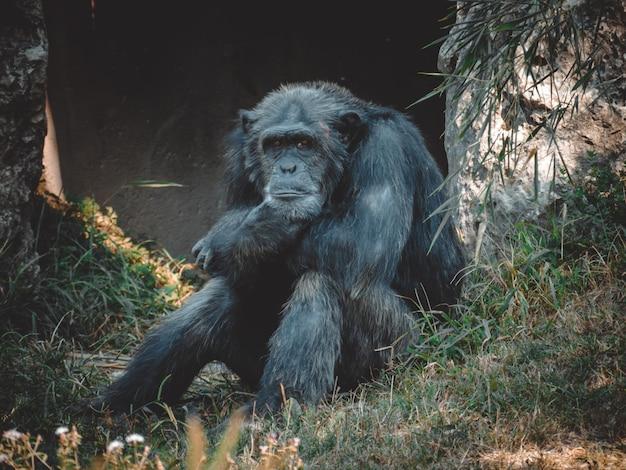 Een fantastisch uitzicht op een prachtige chimpansee