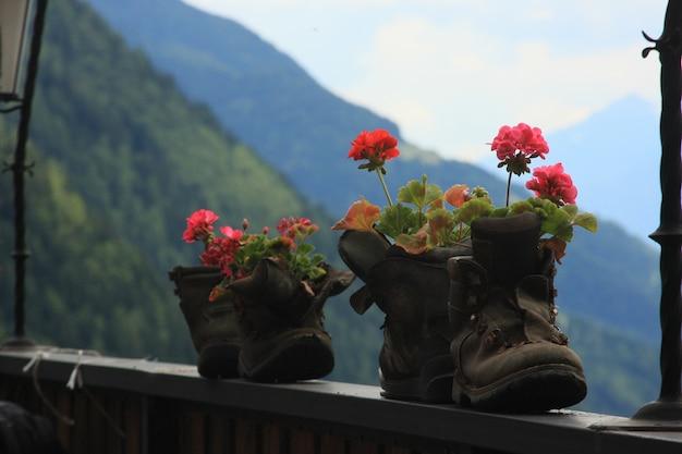 Een foto van bloemen in de bergen