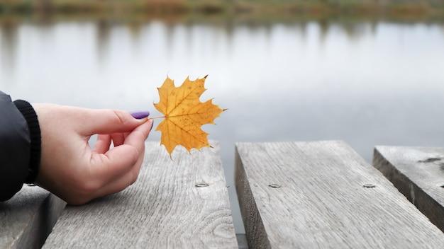Een geel blad in de hand van de meisjes op een houten brug bij het meer in het park. herfst, thanksgiving en lifestyle concept. een gevallen geel blad in zijn hand. natuur.