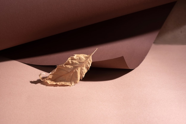 Een geel herfstblad staat op een bruin opgerold papier in een zonlicht.
