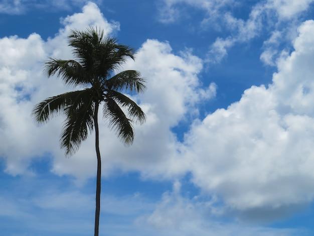 Een geïsoleerde kokosnoot boom met blauwe lucht en witte wolken