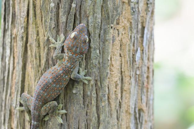 Een gekko streek op een boom neer
