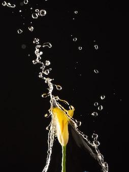 Een gele calla lelie onder een stroom water