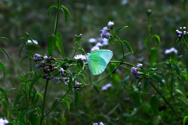 Een gele grasvlinder die tijdens de lente in de tuin op het blad rust