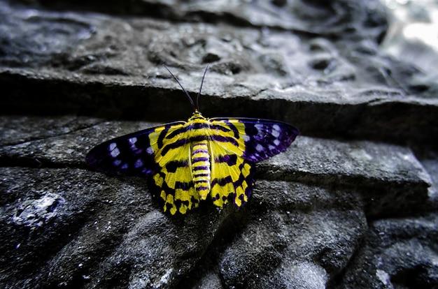 Een gele vlinder op de oude muur