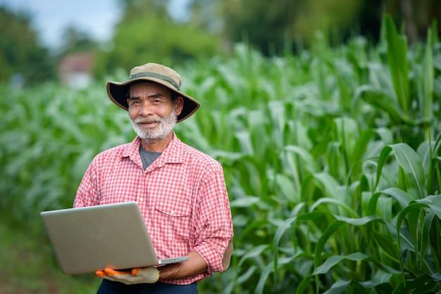 Een gelukkige bejaarde die een hogere landbouwer is die laptop met behulp van die maïsbladeren onderzoekt
