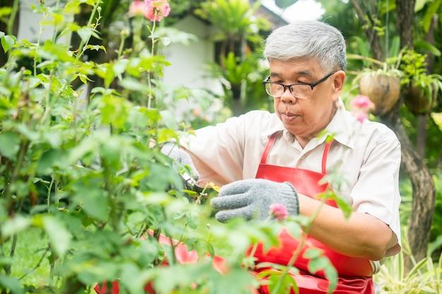 Een gelukkige en glimlachende aziatische oude bejaarde man snoeit takjes en bloemen voor een hobby na pensionering in een huis. concept van een gelukkige levensstijl en een goede gezondheid voor senioren.