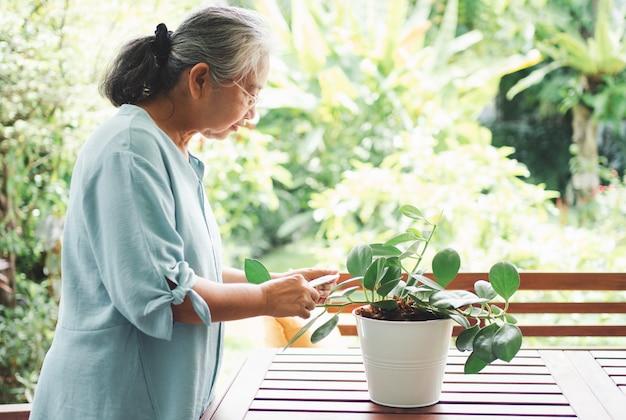 Een gelukkige en glimlachende aziatische oude bejaarde vrouw plant voor een hobby na pensionering in een huis.