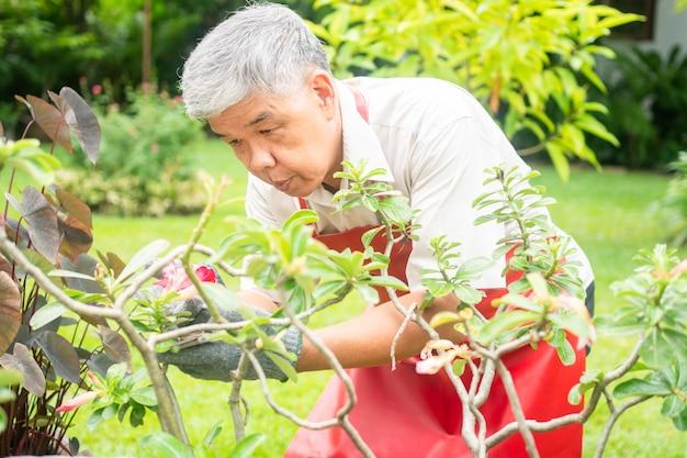 Een gelukkige en glimlachende aziatische oude oudere man snoeit takjes en bloemen voor een hobby na pensionering in een huis.