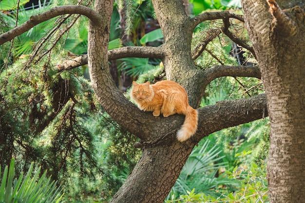 Een gember dakloze kat zit op een boomtak.