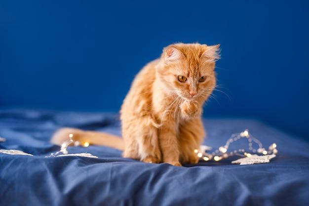 Een gember pluizige kat zit op het bed en wast op een blauwe achtergrond met een slinger van kerstmis.