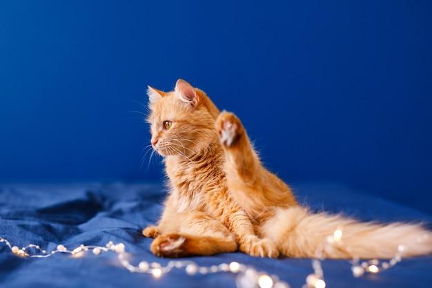 Een gember pluizige kat zit op het bed