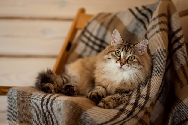Een gemberkat ligt op een sprei in een houten huis
