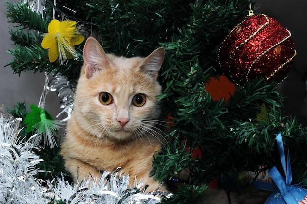 Een gemberkat zit op de versierde kerstboom en kijkt naar de camera