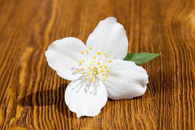 Een gescheurde witte geurige jasmijnbloem op een houten tafel